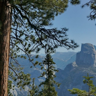 Half Dome and pines